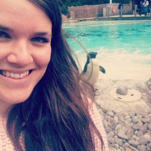 Rockhopper penguin at London Zoo