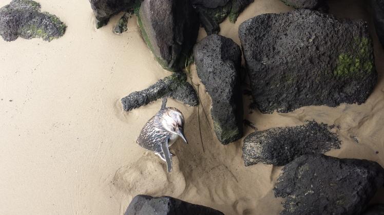 Penguin spotting on the beach!