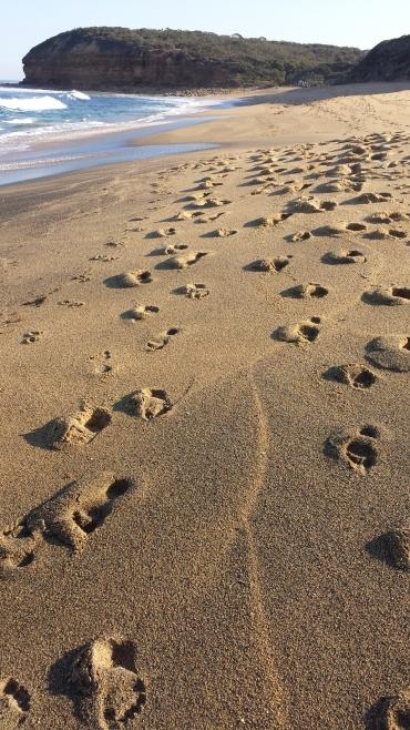Winkipop beach footprints