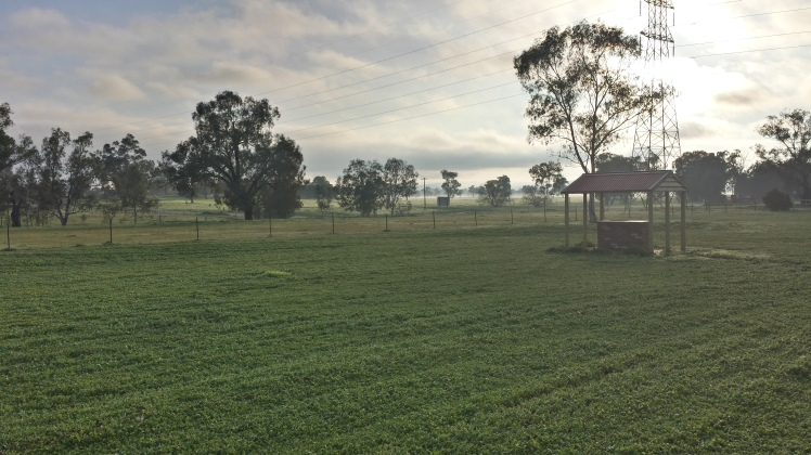 Early morning countryside